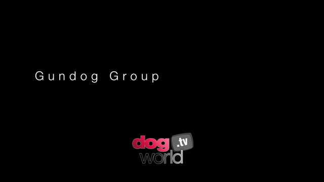 Manchester Gundog Group and BIS