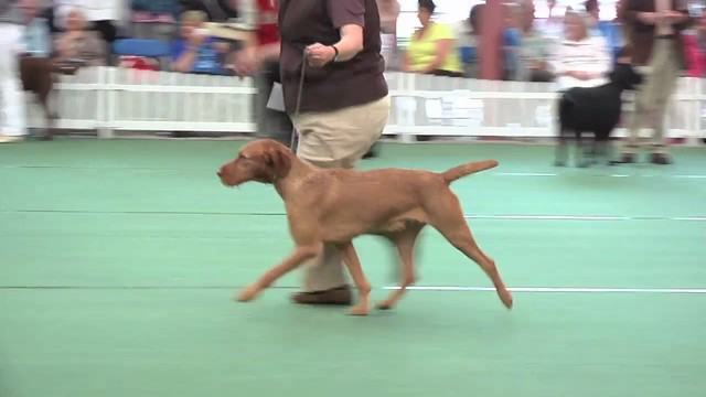 WKC 2011 Gundog Group
