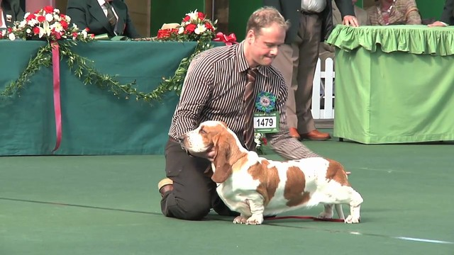 WKC 2011 Hound Group