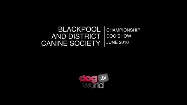 Blackpool 2010 - Terrier group & BIS