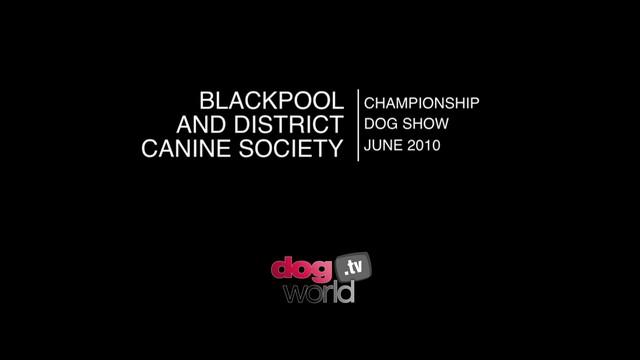 Blackpool 2010 - Terrier group & BIS