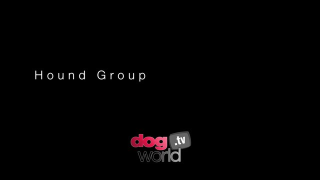 Manchester Hound Group and BIS