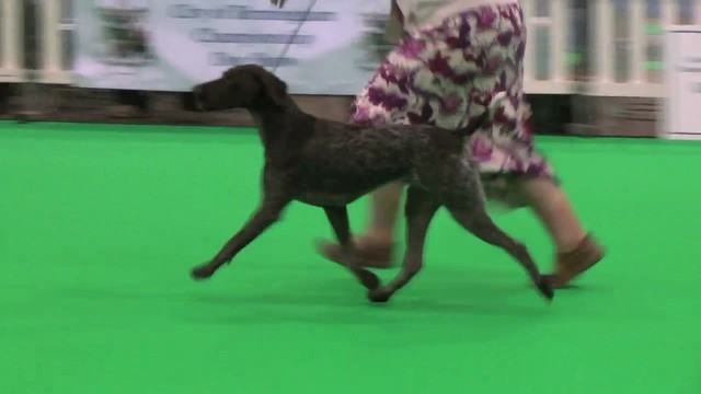 City of Birmingham 2011 Gundog Group