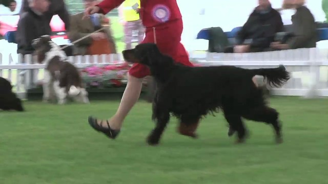 Blackpool 2011 Gundog Group