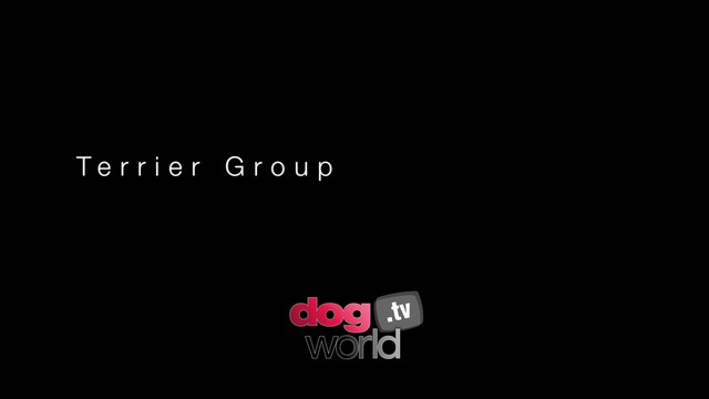 Manchester Terrier Group and BIS